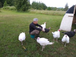 Jim and the Turkeys